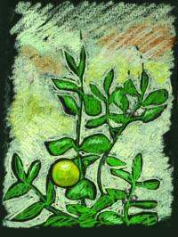 Lemone Chalk on black paper 1998